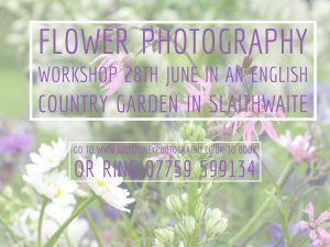 Flower Photography Workshop